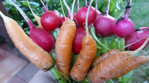 Gemüsegarten auf engstem Raum und selbst auf dem Balkon oder im - gemusegarten anlegen fur anfanger
