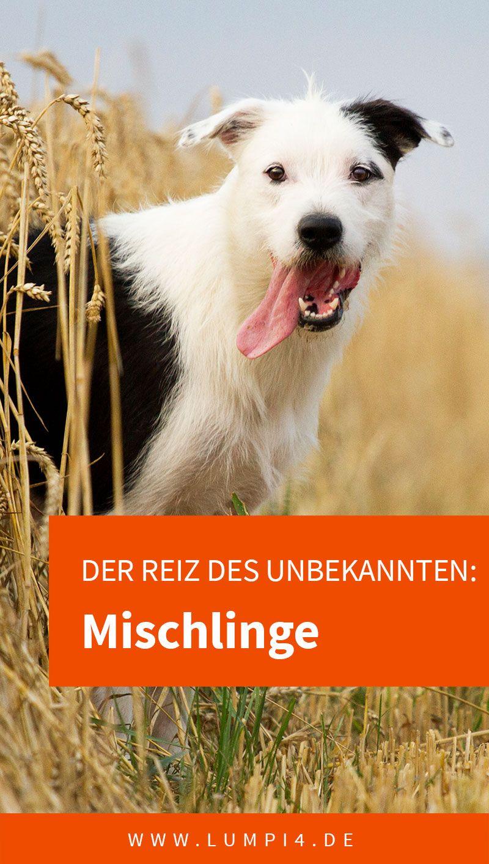 Der Reiz Des Unbekannten Mischlinge Mit Bildern Hunde Mischlinge Hunderassen Hunde Rassen