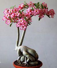 Pin On Bonsai