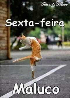 Roxy In Blog Bom Fim De Semana Frases Pinterest Cats