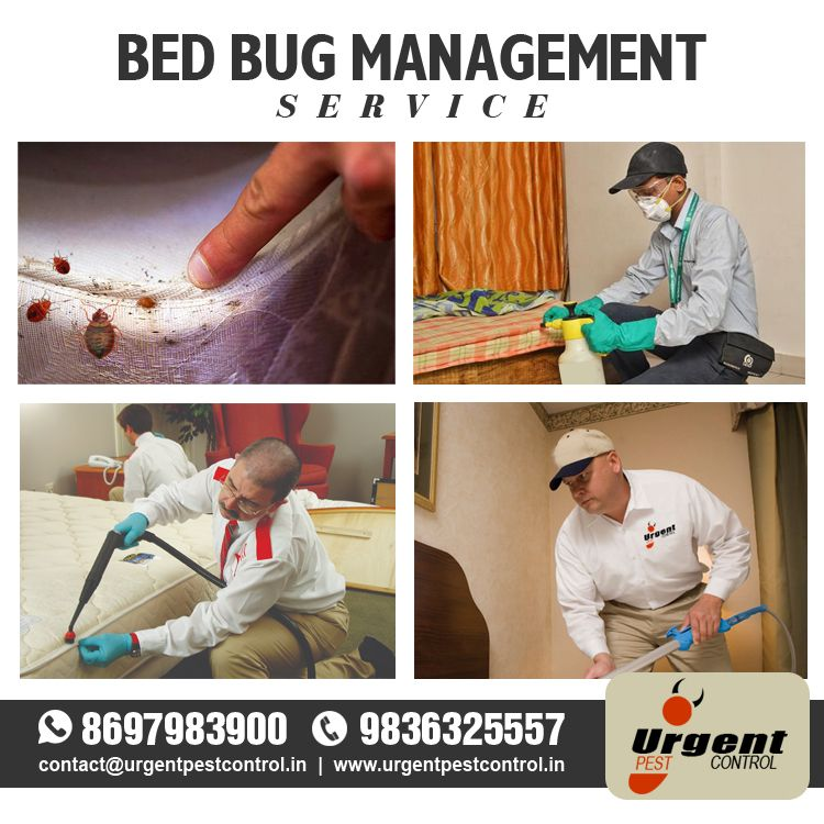 Confirmed Bed Bug Infestations Should Be Managed By Trained Professionals Managing A Bed Bug Infestation Is A Dif Bed Bugs Infestation Bed Bugs Bugs