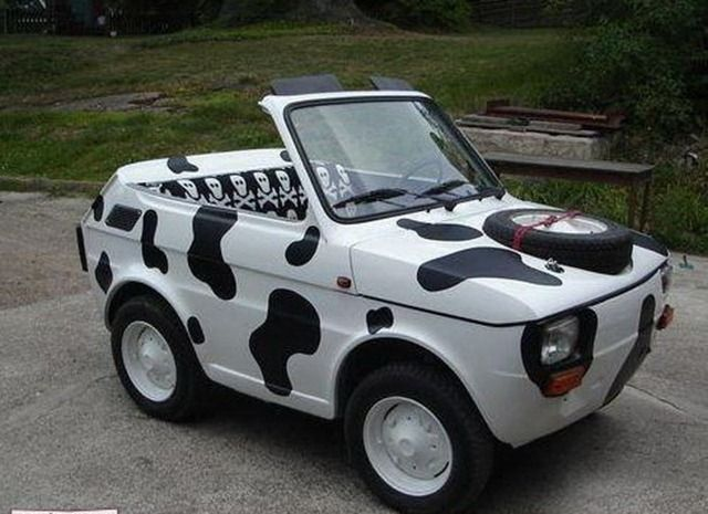funny looking cars and unusual cars time idol funny animals