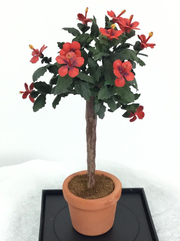 Kimberly Hammer Ambrosia Miniature Plants And Flowers Flowering