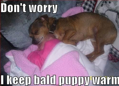Cute Puppies With Funny Jokes Cute Dog Pictures Bald Puppy