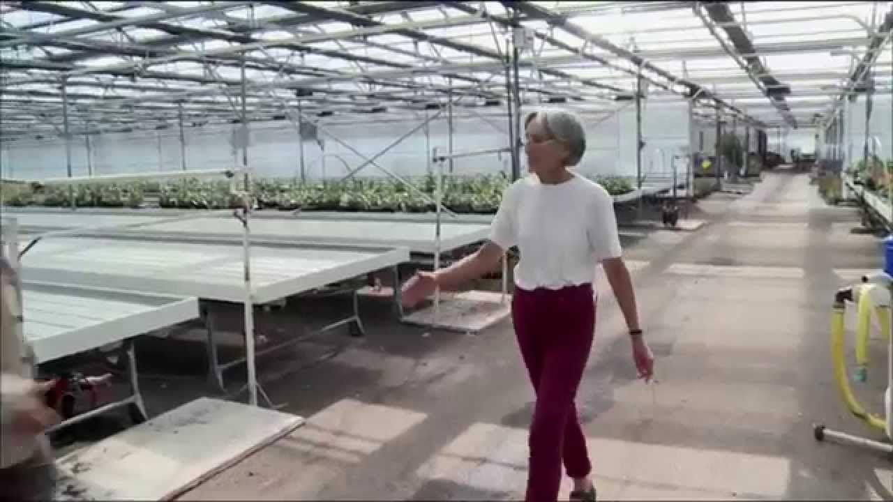Wie können Pflanzen fast ohne Wasser gedeihen? - FUTURE - ARTE