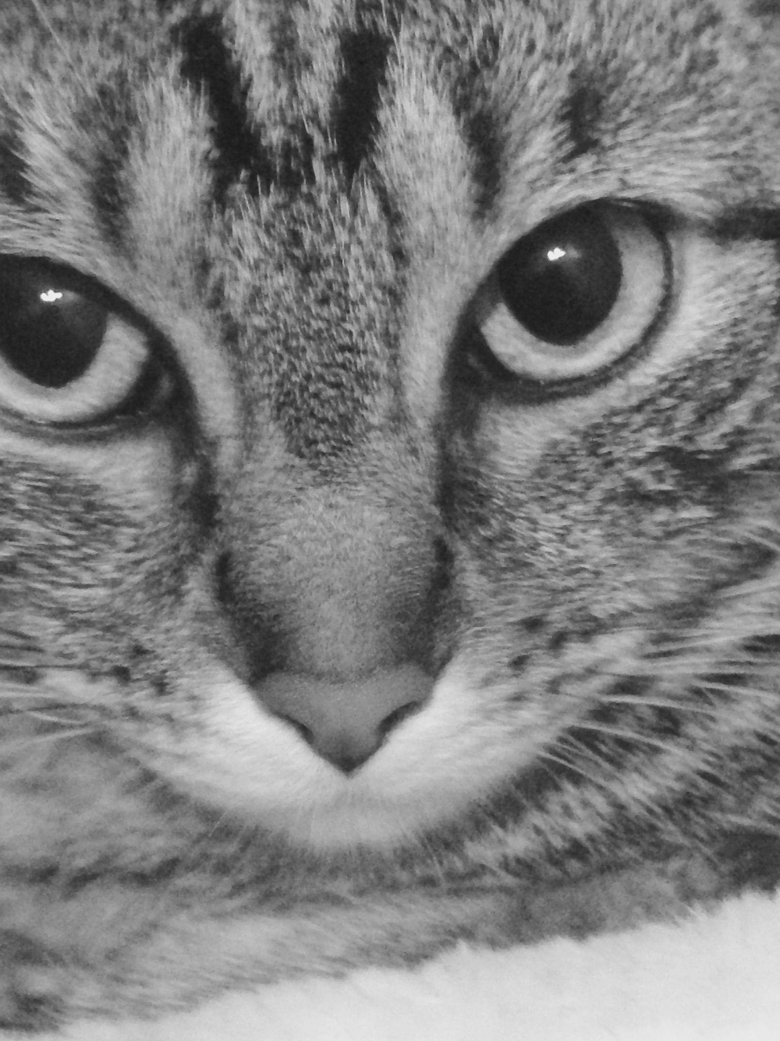 My cat 💯😍