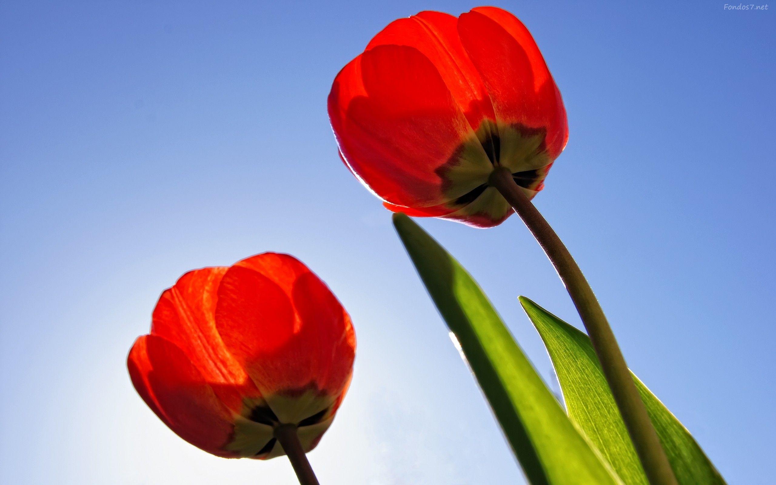 Fondos De Pantalla De Flores Hermosas Para Fondo Celular