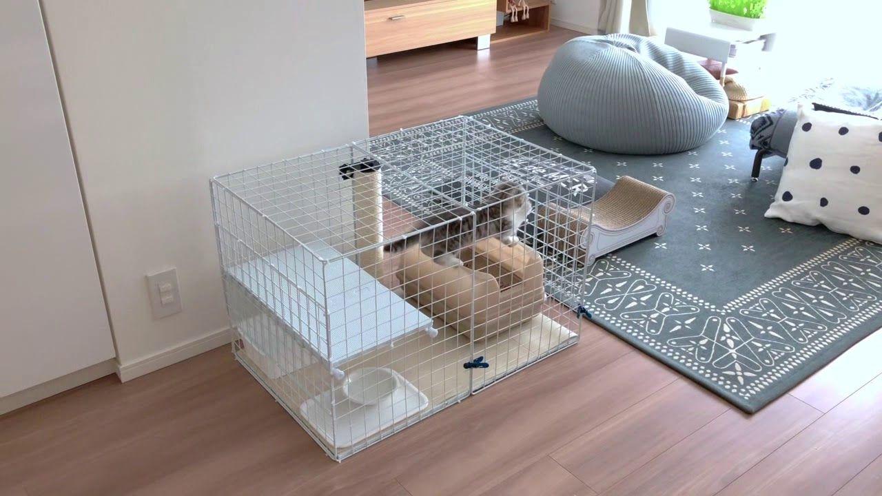 ぐう15 おはよう ケージから出す時の猫の様子 Cat S Appearance When The Cage Door Is Opened Youtube 猫 ケージ Diy ケージ 猫ケージ