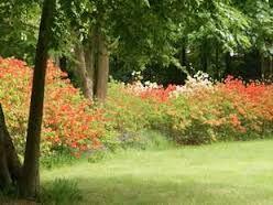 Engelse Landschapsstijl Tuin : Afbeeldingsresultaat voor engelse landschapsstijl plein en park