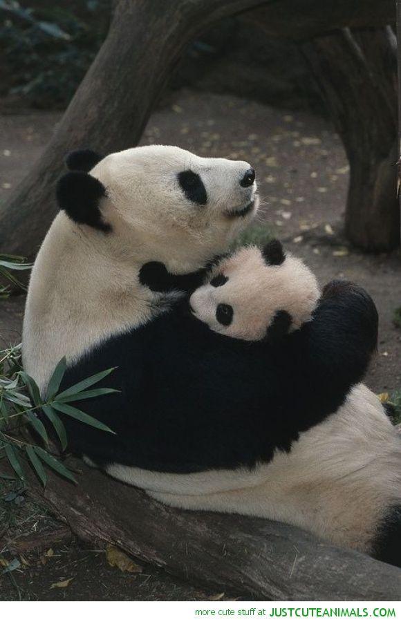 Lindos | panda world ❤ | Pinterest | Tier