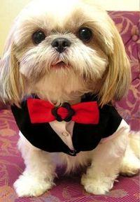 Valentine Tuxedo My Pets Wardrobe Dog Clothes Australia Dog