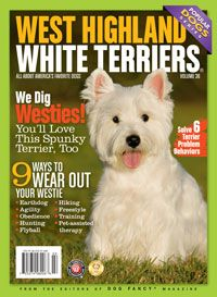 West Highland White Terriers This Little Dog Lives Life To The Max And At Full Throttle