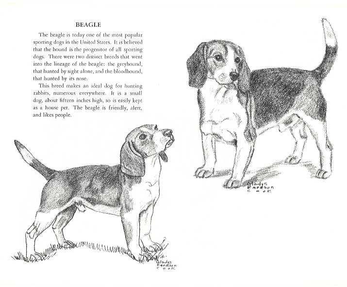 Beagle Jpg 715 591 With Images Dog Print Art Vintage Dog