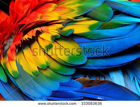 Colorful of Scarlet macaw bird's feathers with red yellow orange and blue shades, exotic nature background and texture - stock photo