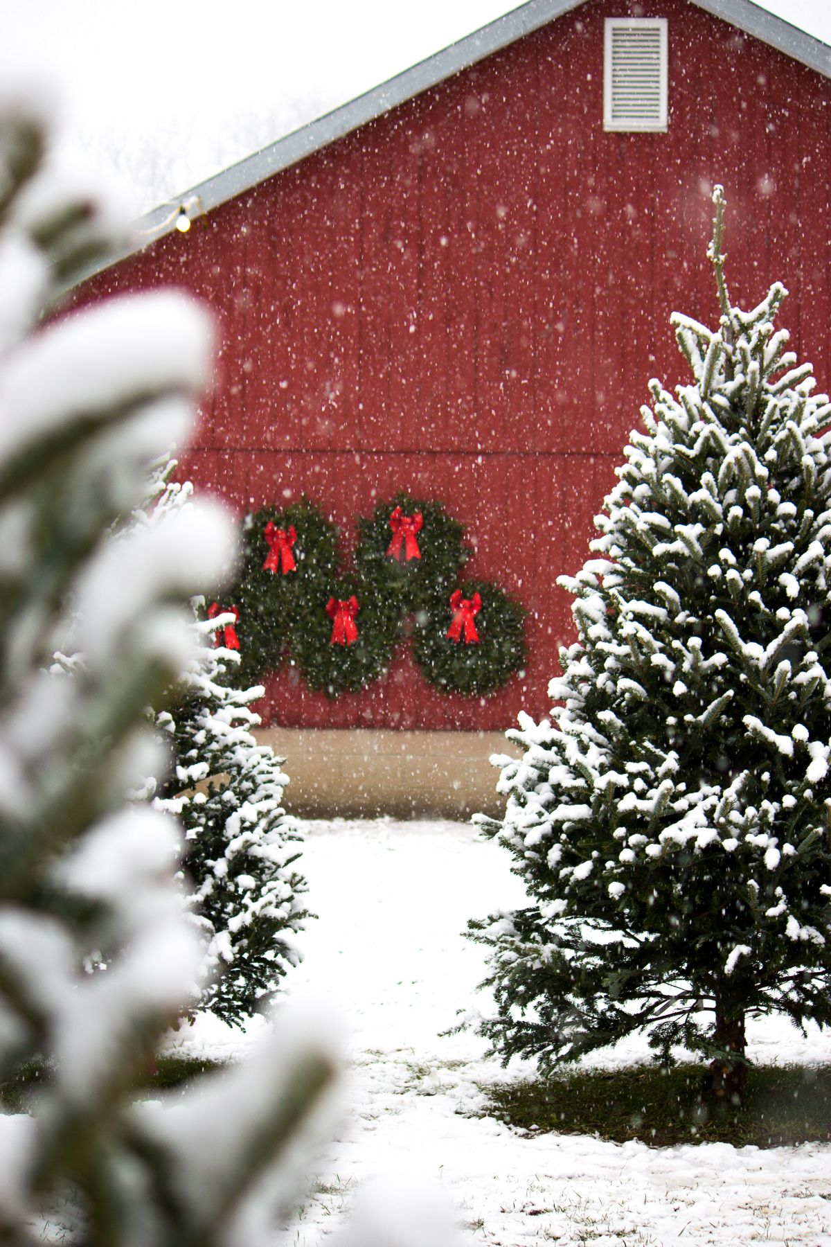Winter Wonderland Christmas Tree Farm Christmas Feeling Christmas Aesthetic