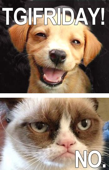 Tgif Grumpy Cat Fun Grumpy Cat Grumpy Cat Humor Grumpy Cat Meme