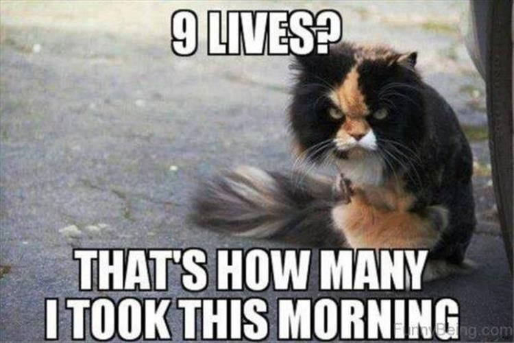 Funny Animal Picture Dump 27 Pics Funny Good Morning Memes Cat Memes Clean Funny Animal Pictures