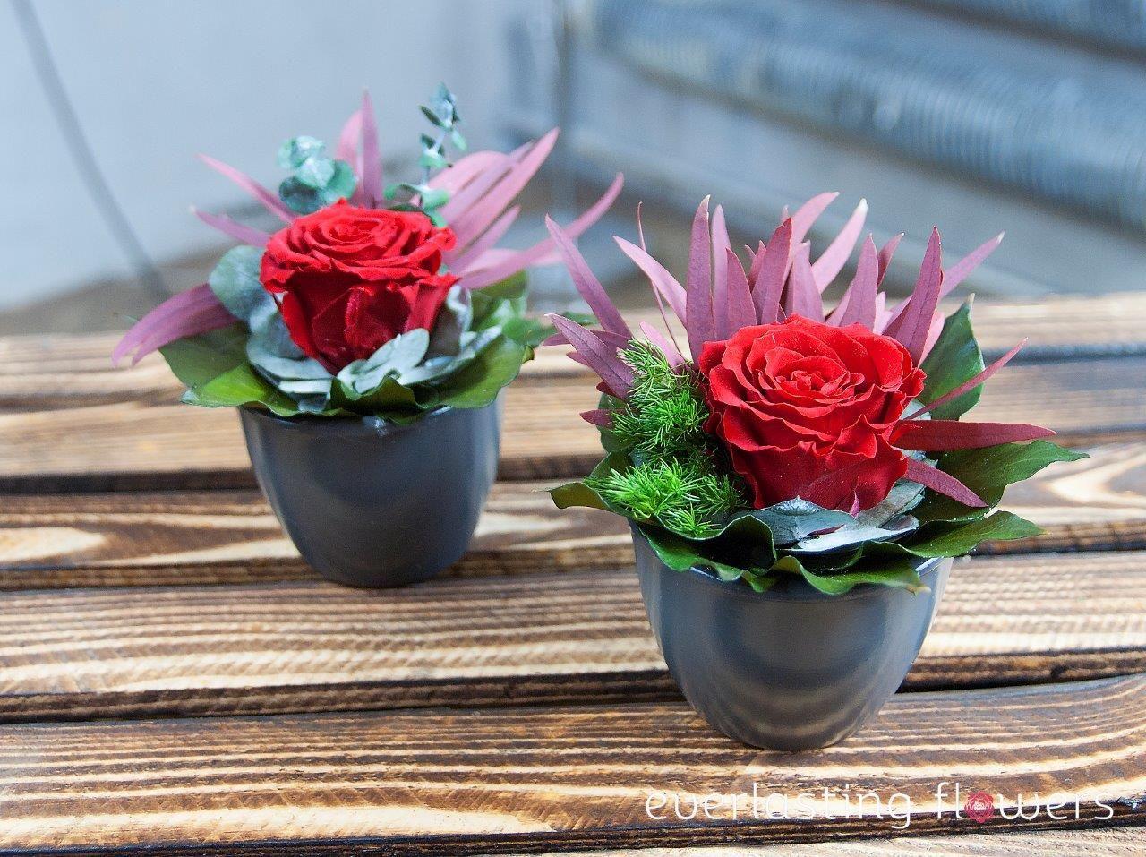 Kwiaty W Pudelku Flower Boxes Flowers Plants