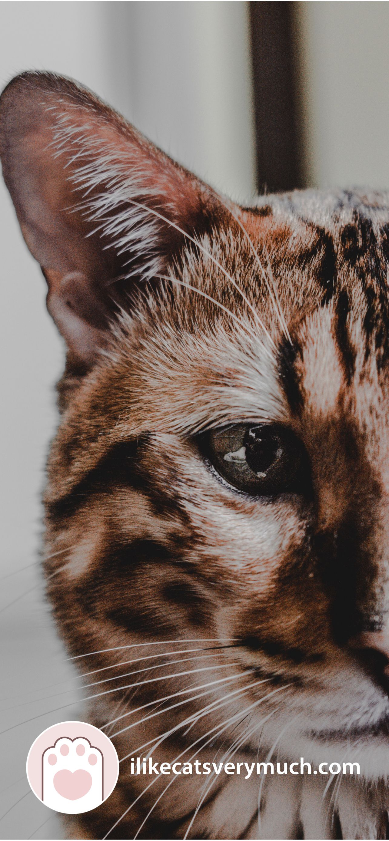 Cat Wallpapers For Phone 2021 I Like Cats Very Much In 2021 Cat Wallpaper Cats Cute Cat Wallpaper