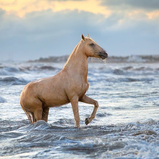 "Equine Photographer on Instagram: ""In Djerba we had scheduled a sunrise photo session at the beach,"