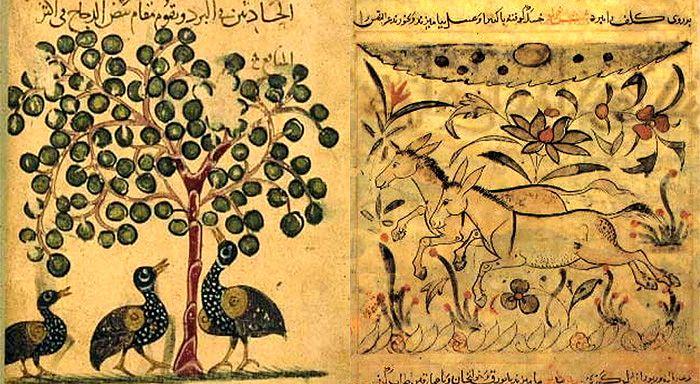 Картинки по запросу jahiz book of animals