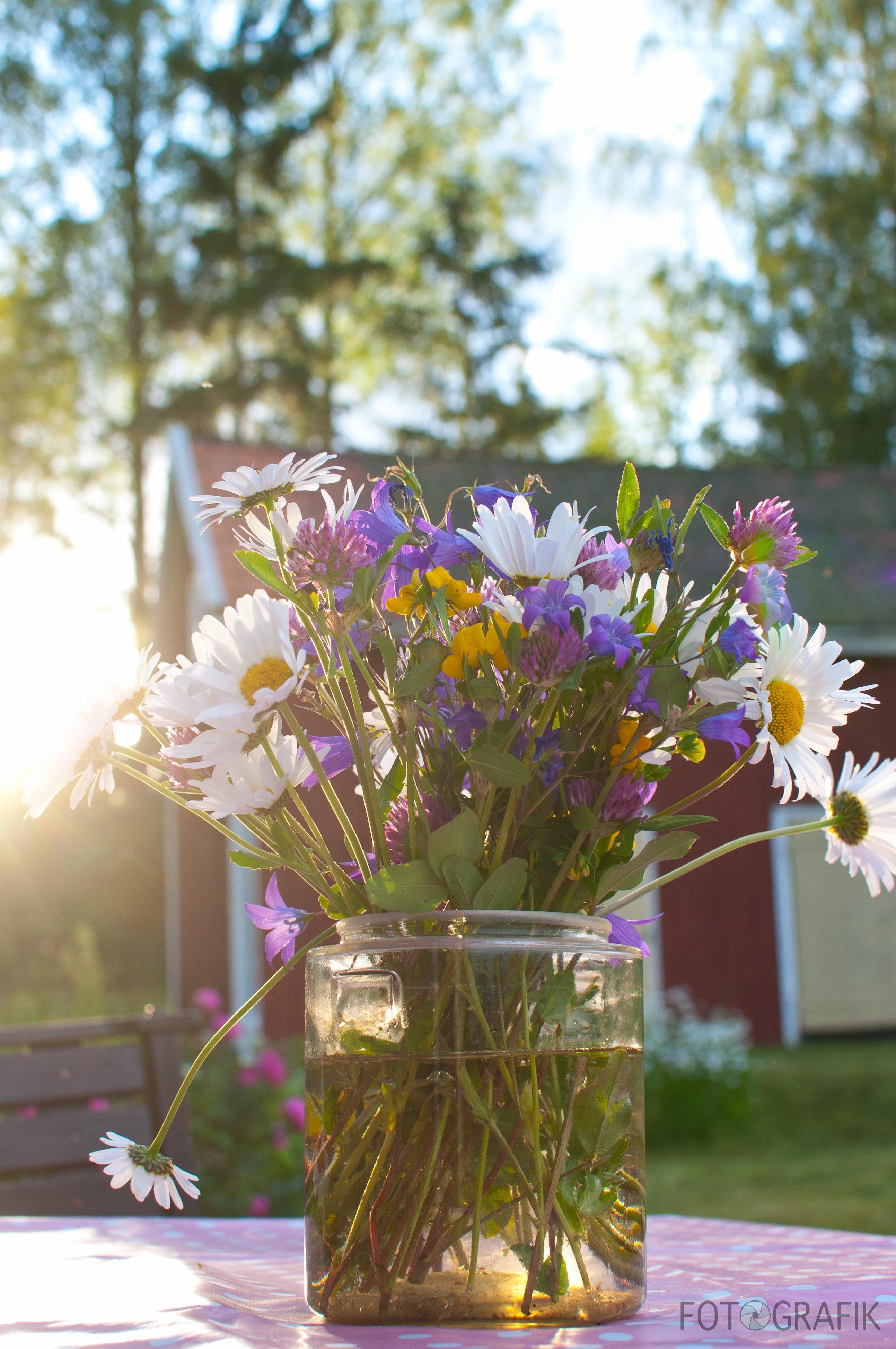 Swedish midsummer flowers