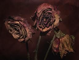 Dead Flowers Just Some Roses From Valentines Day I Used Topaz To Sharpen And Remove Of The Color