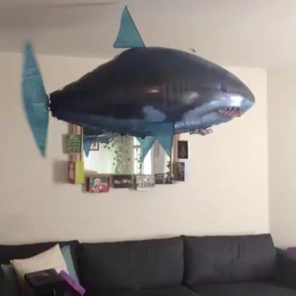 #AirSwimmer #MerryChristmas #ApartmentLifeSucks #TinyHouse #BigShark