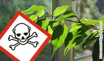 plantes d 39 int rieur et d 39 ext rieur toxiques pour les. Black Bedroom Furniture Sets. Home Design Ideas