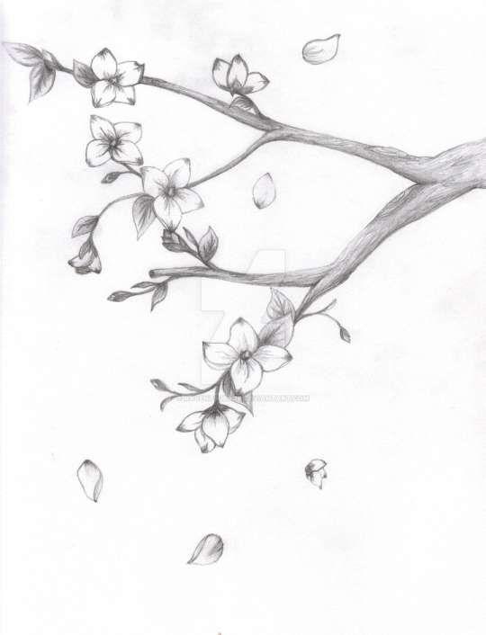 17 Japanese Cherry Blossom Tree Pencil Drawing Cherry Blossom Drawing Tree Drawings Pencil Japanese Blossom
