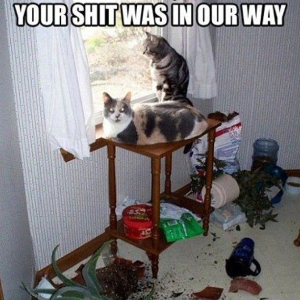 Cats rule the roost! Yes they really do think OUR stuff is in the way! LMAO
