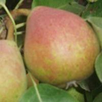 Fruittuin - Webshop - Fruittuin webwinkel