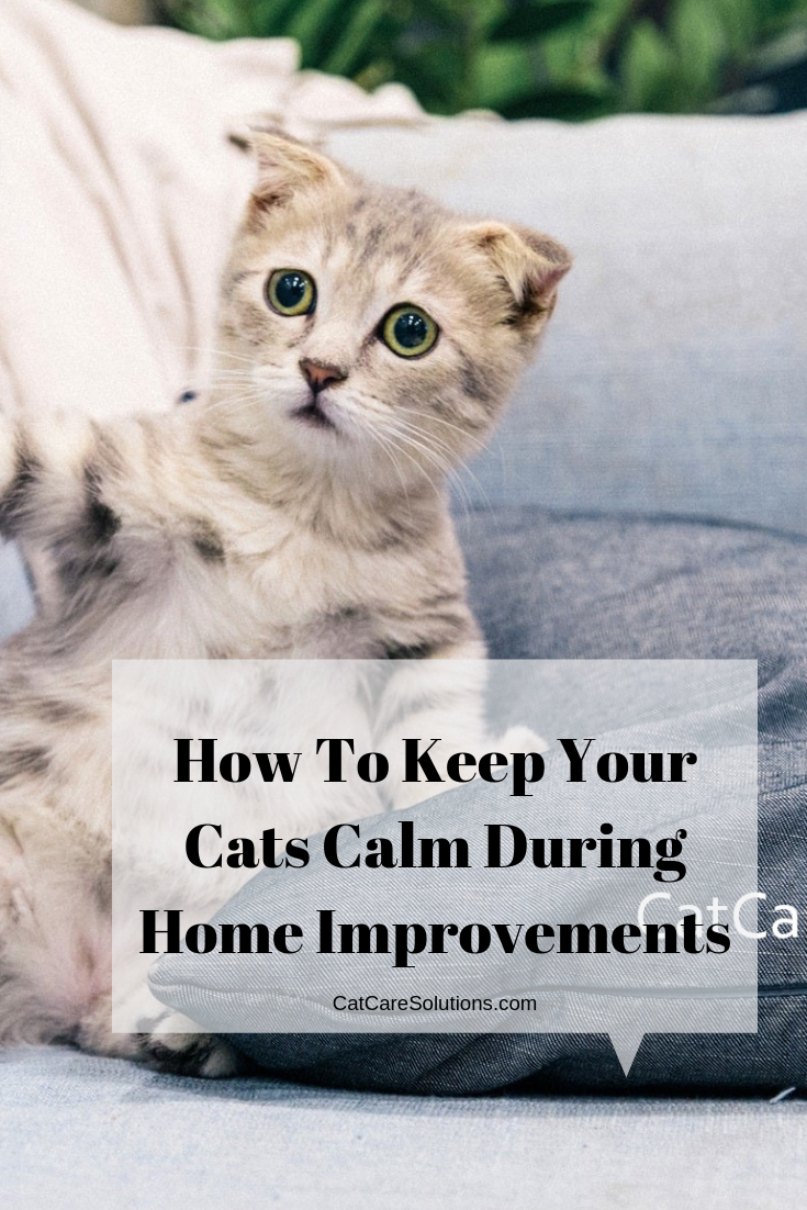 How To Keep Your Cats Calm During Home Improvements Cat Care Cat Parenting Cats