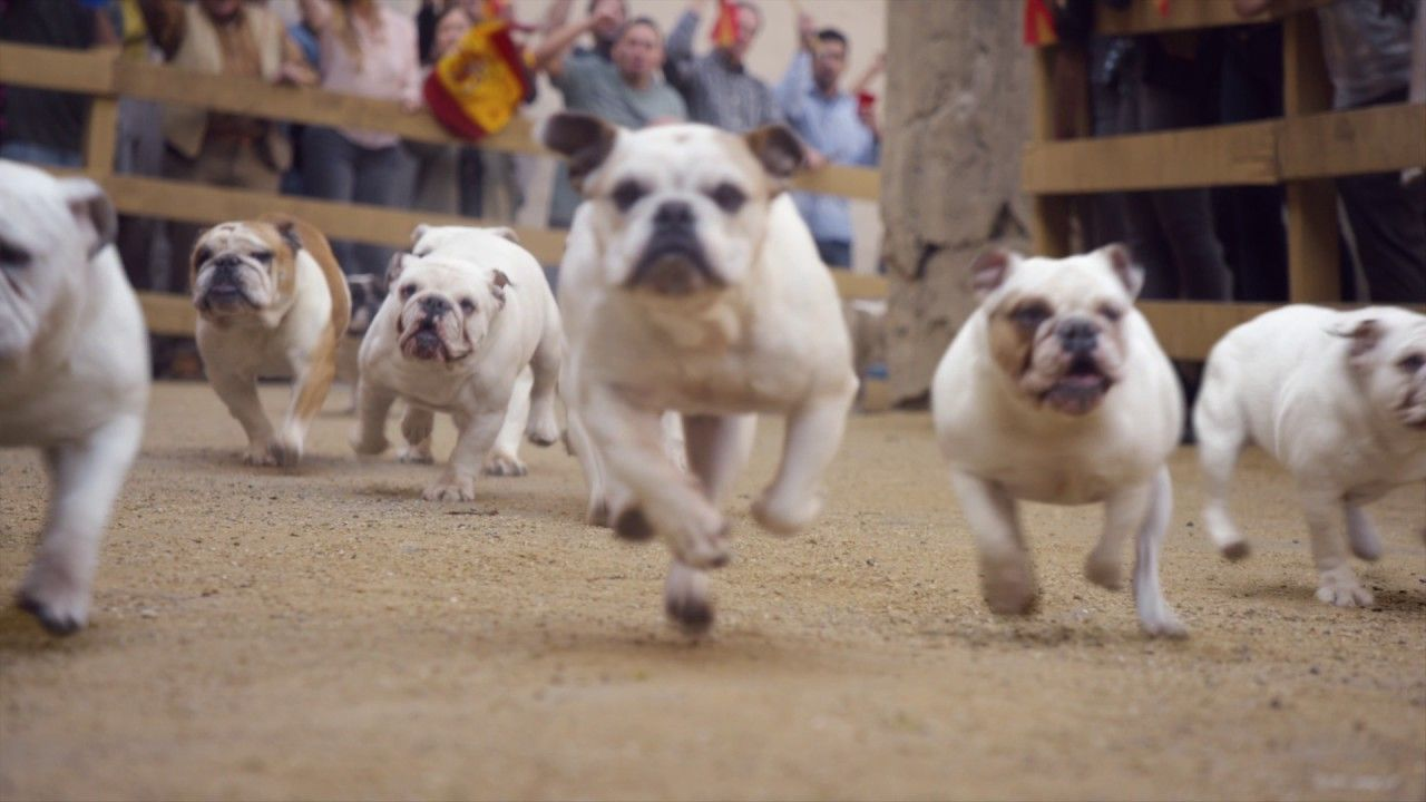 Running Of The Bulldogs Geico Video Tv Commercial Lj