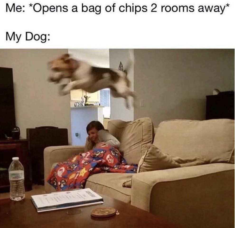 100 Pet Memes That Will Make You LOL Over And Over Again