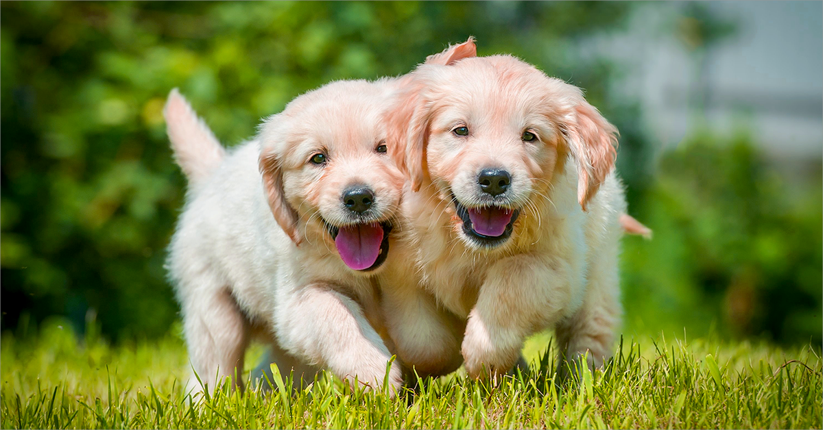Petplan Offers The Most Comprehensive Coverage In One Simple Plan