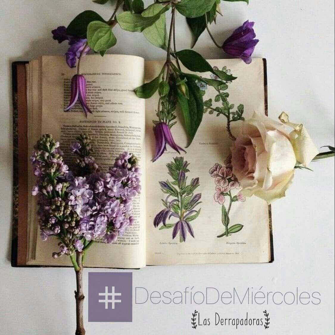 #Miércoles #DdM #DosEnUno 👉Nombra un libro con una flor en su portada. (¿Lo recomendarías?) #UnaPortadaYUnaFlor #NosMatamosCadaVezmMás 😝