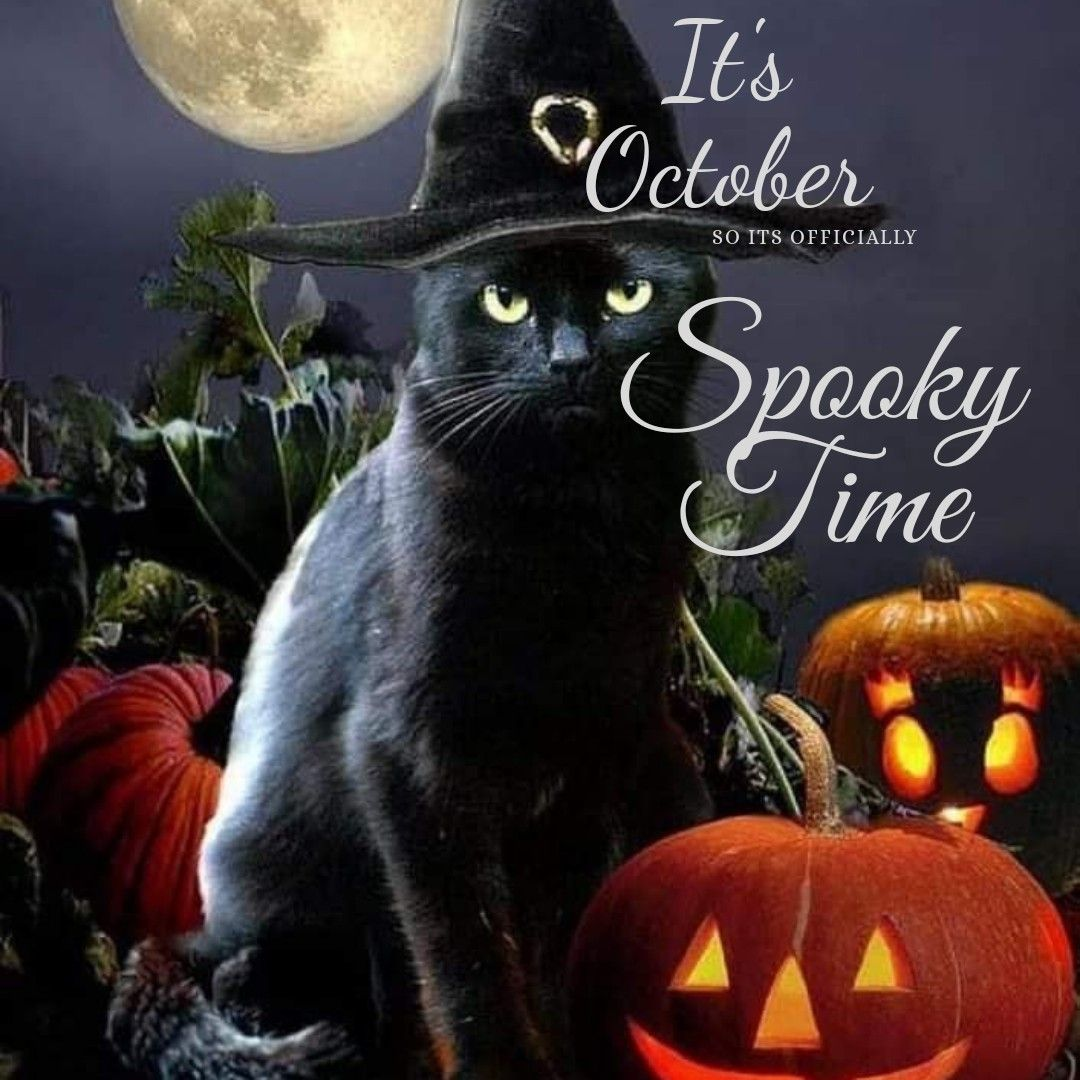 October is all about Halloween! Your pet, Love pet, Pets