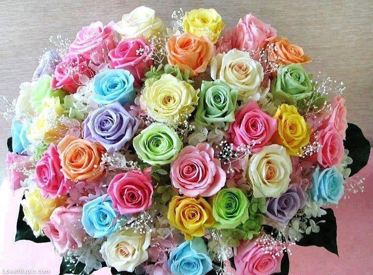 زهور رائعة الجمال اجمل ورود فصول السنة Rainbow Roses Rose