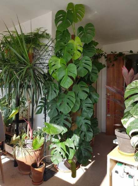 19 Ideas Plants Indoor Ideas Apartments Wohnung