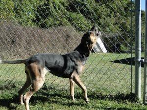Virginia Urg T Pinned 10 30 13 F Sadie Is An Adoptable Bluetick Coonhound Dog In