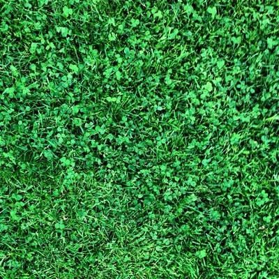 PT 769 R&R Eco-Turf Mix | Garden | Grass alternative, Clover