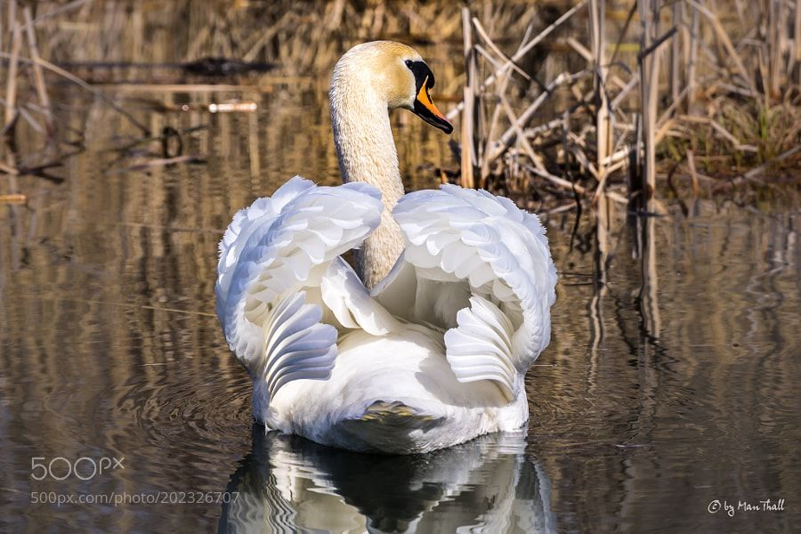 A nice back can also delight - Ein schöner Rücken kann auch entzücken by ManThall via http://ift.tt/2muy75y