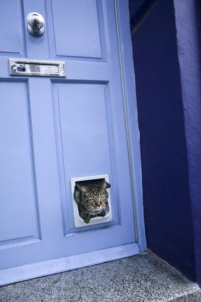 How To Install A Cat Door In A Hollow Core Door Hollow