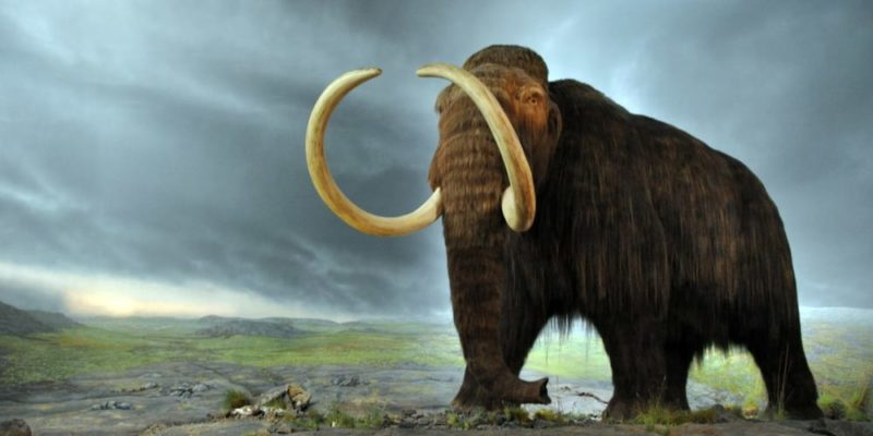 10 Características De La Era Cenozoica Mamuts Animales Extintos Animales Prehistóricos