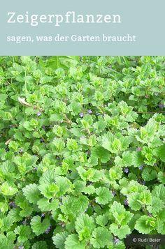 Photo of Reconocer plantas punteros