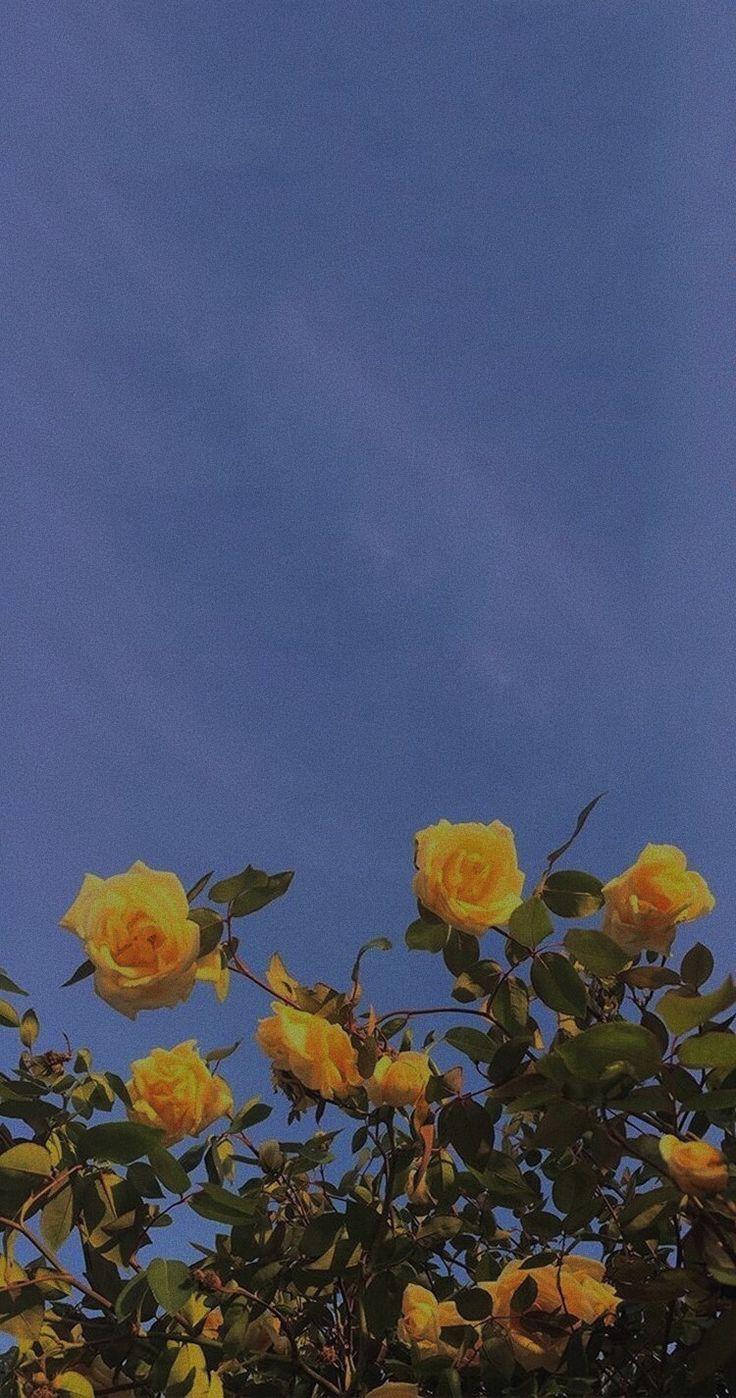 #Gelb -  - #hintergrundbilder #flowershintergrundbilder