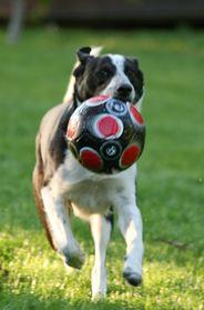 4 Paws University Sacramento Dog Obedience Training Dog Training