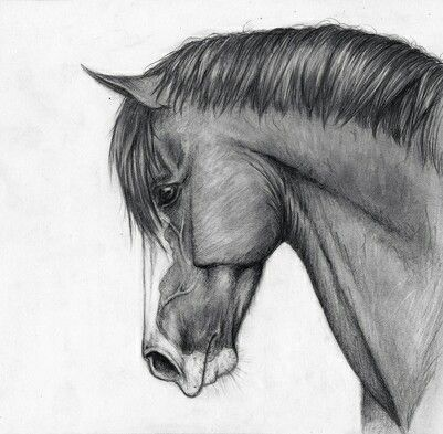 Cheval cute dessin drawing horse noir et blanc profil wonderful noir et blanc - Image tete de cheval ...