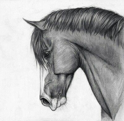 Cheval cute dessin drawing horse noir et blanc profil wonderful noir et blanc en 2019 - Profil dessin ...